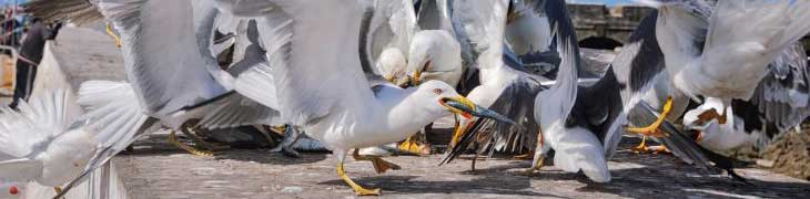 The Pest Technician - Bird, Pigeon & Seagull Control & Proofing